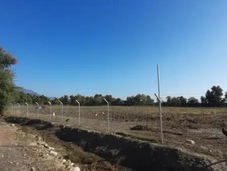 Köyceğiz Döğüşbelen Mevkisinde 32000M2 Tarıma Elverişli Avokado,Sera Yapımı,Çiftlik,Hayvancılık İçin Uygun Satılık Arsa